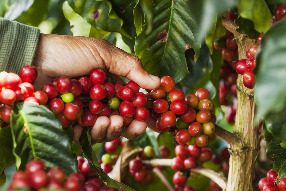 colombian-supremo-coffee-beans